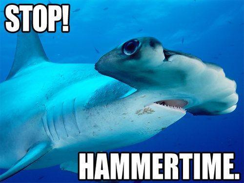 shark-pun-stop-hammertime